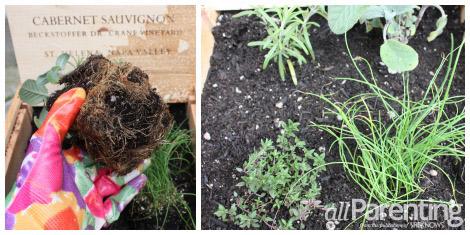 herb box step 3