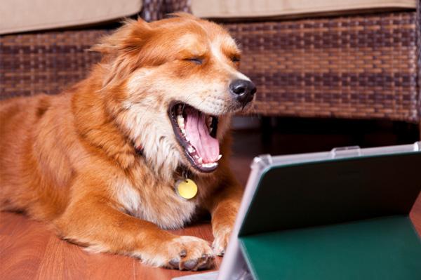 Dog on iPad