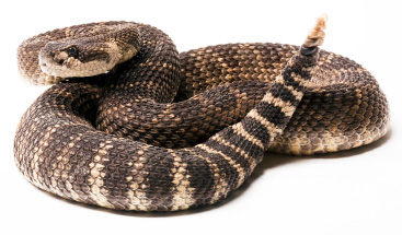 This snake recipe has some bite!