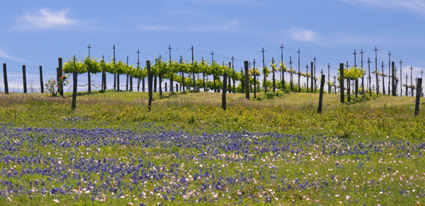 Texas winery