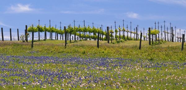 True Texas vino