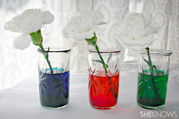 Colored water and flowers science experiment