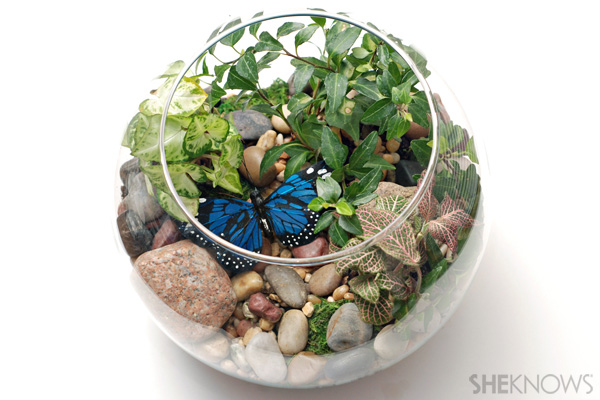 Indoor terrarium craft
