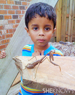 Tiany's son with praying mantis