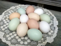hand blown chicken eggs