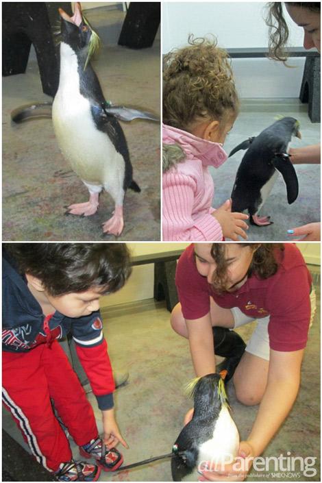 Galveston Penguin Encounter