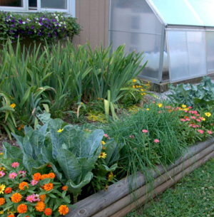 Homesteading garden