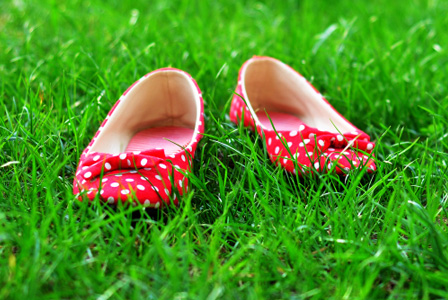 Red flats in grass