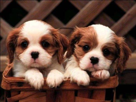 Heart melting puppies 7