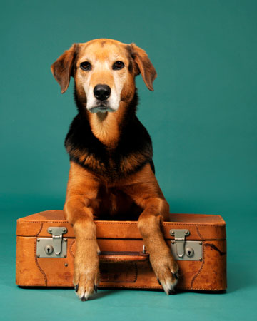 Dog with a suite case waiting for vacation