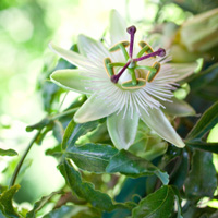 Low-maintenance plants in small gardens