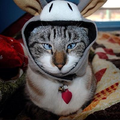 funny cat faces