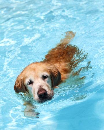 Dog exercising in water