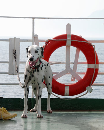 Dog on cruise ship