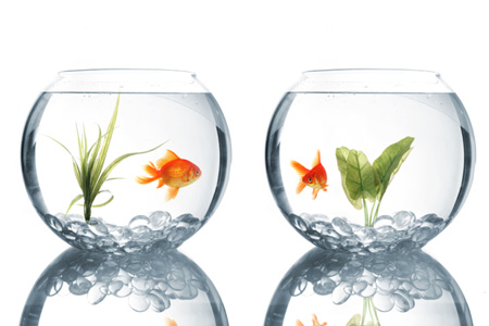 Two fish bowls sitting side by side