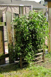 crib upcycling- Garden trellis