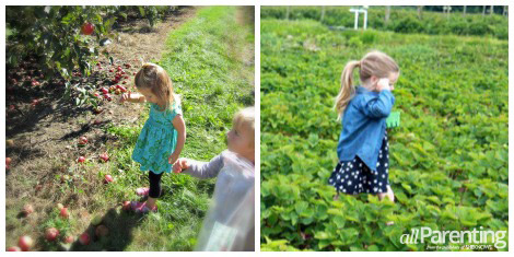 Shop local- berry picking