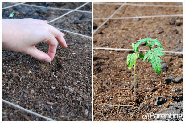 allParenting square foot gardening- planting