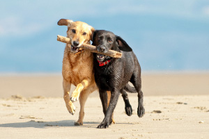 Dogs at beach