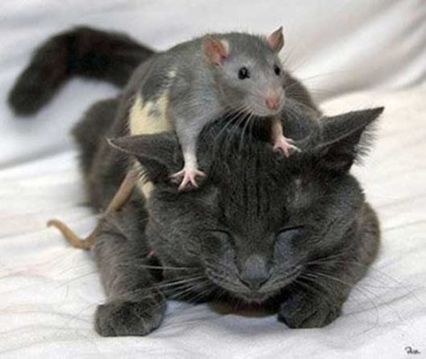 Oddly adorable animal friendships