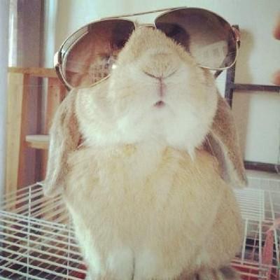 Bunny wearing shades