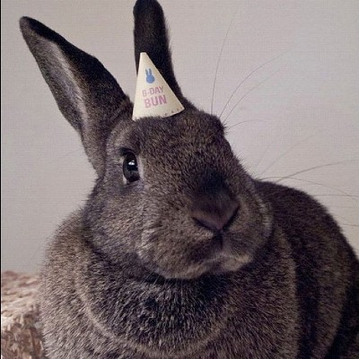 Bunny wearing party hat