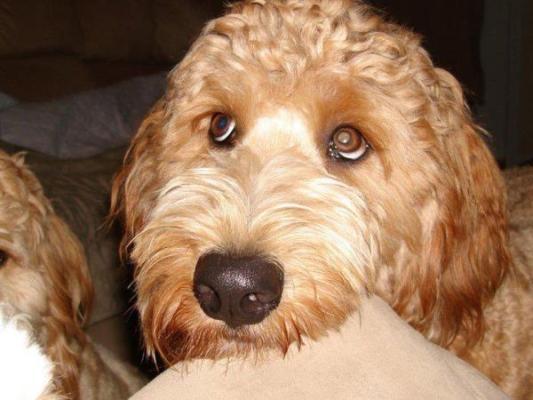 Cute puppy eyes 10