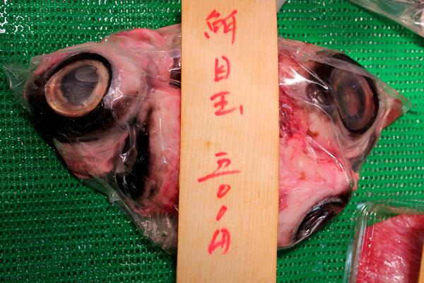 Tuna eyes