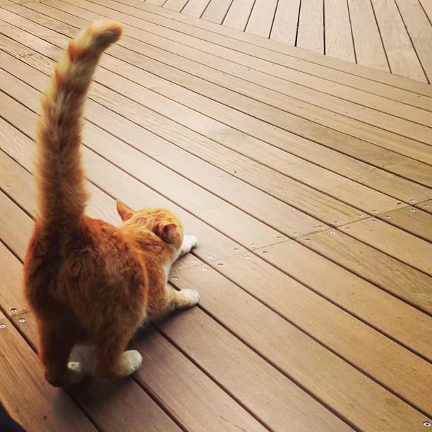 My funny feline