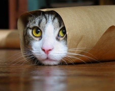 Cat in tube