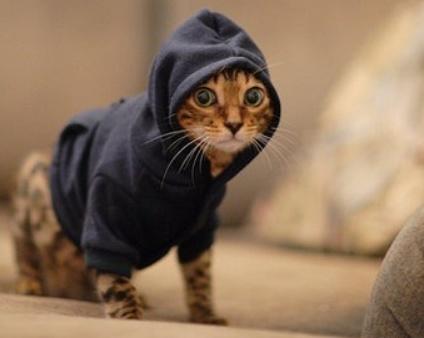 Cat wearing hoodie