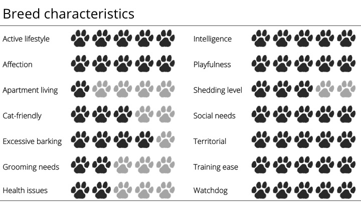 Border collie breed characteristics
