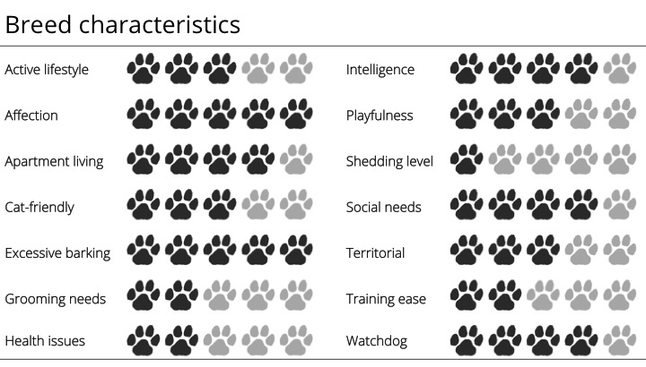 dachshund breed characteristics
