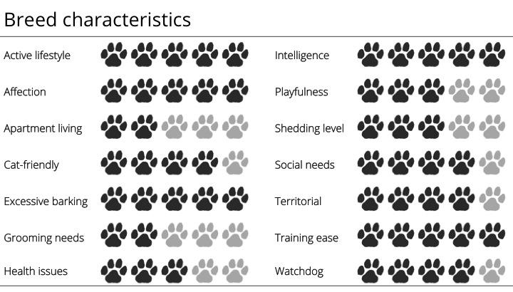 Shetland Sheepdog Breed Standard sheltie breed characteristics