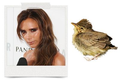 Victoria Beckham loves a good bird poop facial