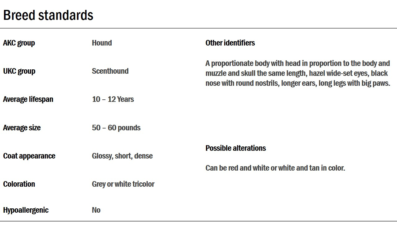 harrier breed standards