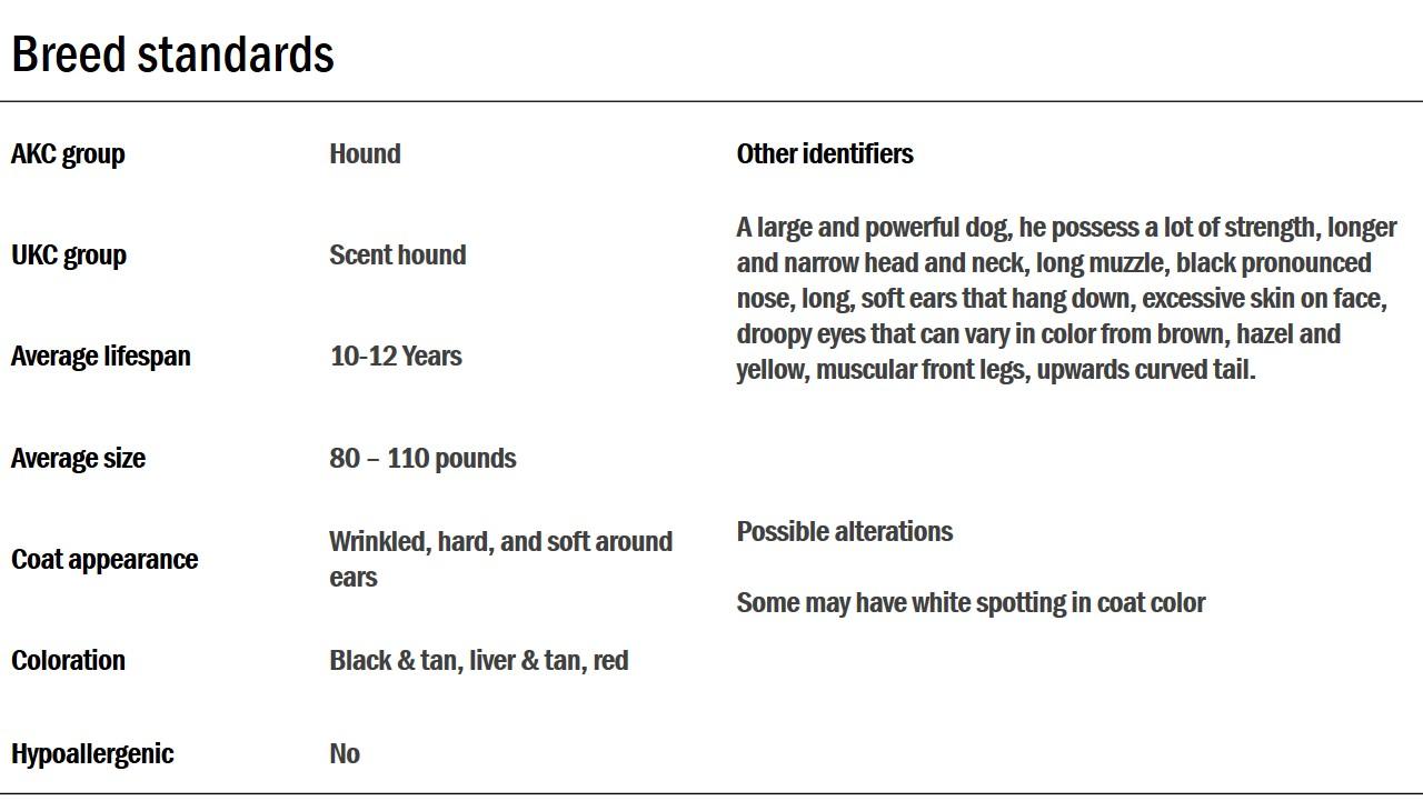 Bloodhound standards