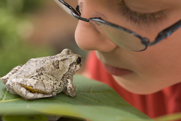 Host an at-home science camp