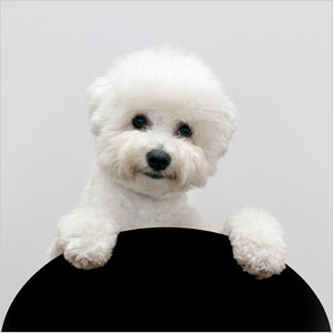 Top Ten Most Lovable Dogs In The World