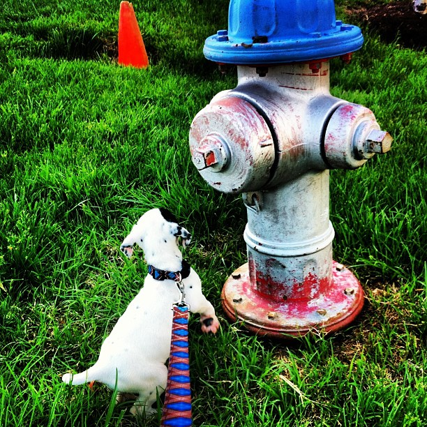 The obsession with fire hydrants