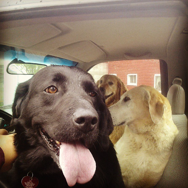 The car ride