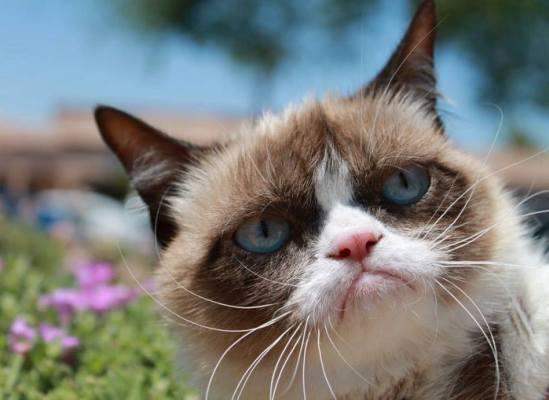 Grumpy Meme Face Grumpy Cat memes