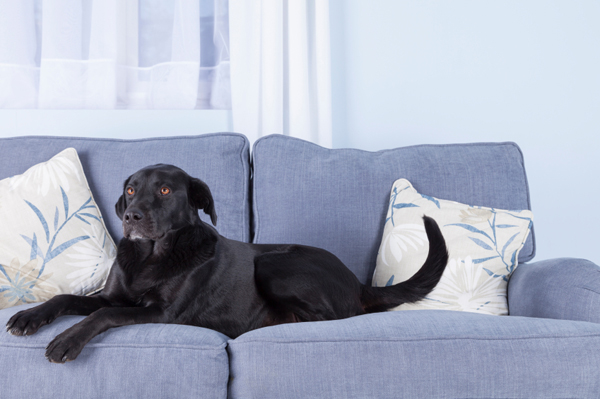 9 Tips For Choosing Pet Friendly Furniture