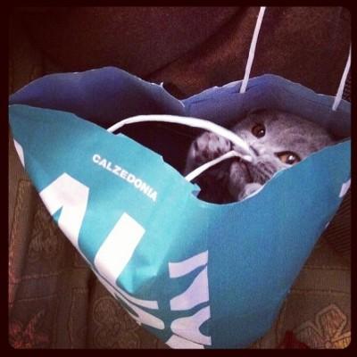 Cat hiding in shopping bag