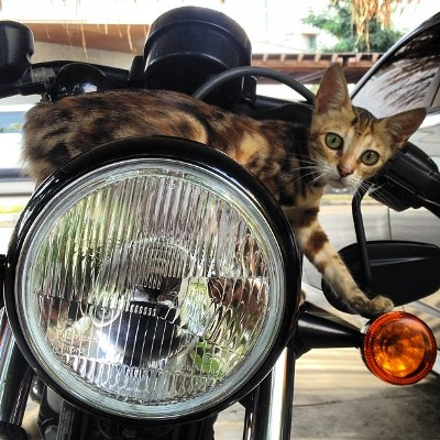 Cat on motorcycle