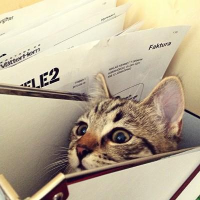 Cat hiding in paperwork
