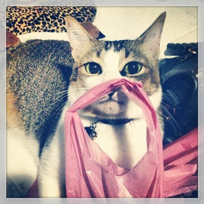 Cat wearing shopping bag as mustache