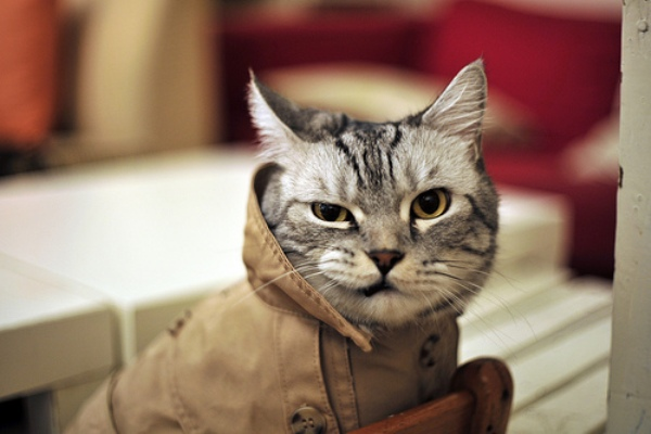 Cat dressed as a detective