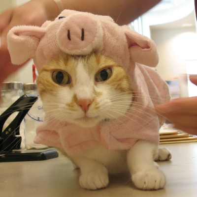 Cat dressed as a pig