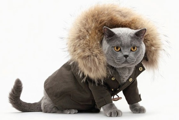 Bundled up cat